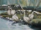 Pelikane 2012 60 x 80 cm Öl auf Leinwand