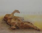 Lamas 2009 40 x 50 cm Öl auf Leinwand