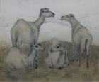 Kamele 2009 50 x 60 cm Öl auf Leinwand