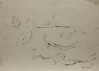Pfauen, Studie Nr.3 1980 35 x 45 cm Grafitstift