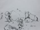 Tierpark Herberstein, Bisons, Studie Nr.2 2011 30 x 42 cm Grafitstift