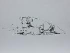 Tierpark Herberstein, Bisons, Studie Nr.3 2011 30 x 42 cm Grafitstift