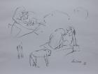 Tierpark Herberstein, Mandrille, Studie Nr.2 2012 30 x 42 cm Grafitstift