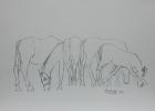 Bundesgestüt Piber, Studie Nr.3 2013 30 x 42 cm Grafitstift