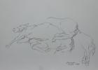 Bundesgestüt Piber, Studie Nr.6 2013 30 x 42 cm Grafitstift