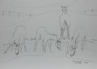 Bundesgestüt Piber, Studie Nr.9 2013 30 x 42 cm Grafitstift