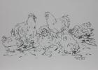 Haushühner 2019 24 x 34 cm Grafitstift
