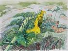 Sonnenblume 2003 30 x 40 cm Aquarell